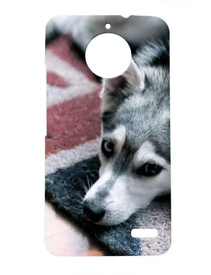 Dog On A Carpet - Motorola Moto E4 Printed Hard Back Cover.