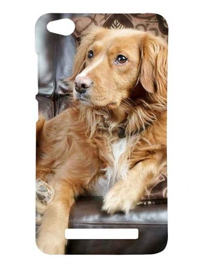 The Brown Australian Shepherd Dog - Redmi 4A Printed Hard Back Cover.